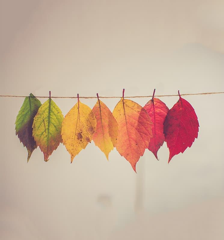 Outono no Coração ♥