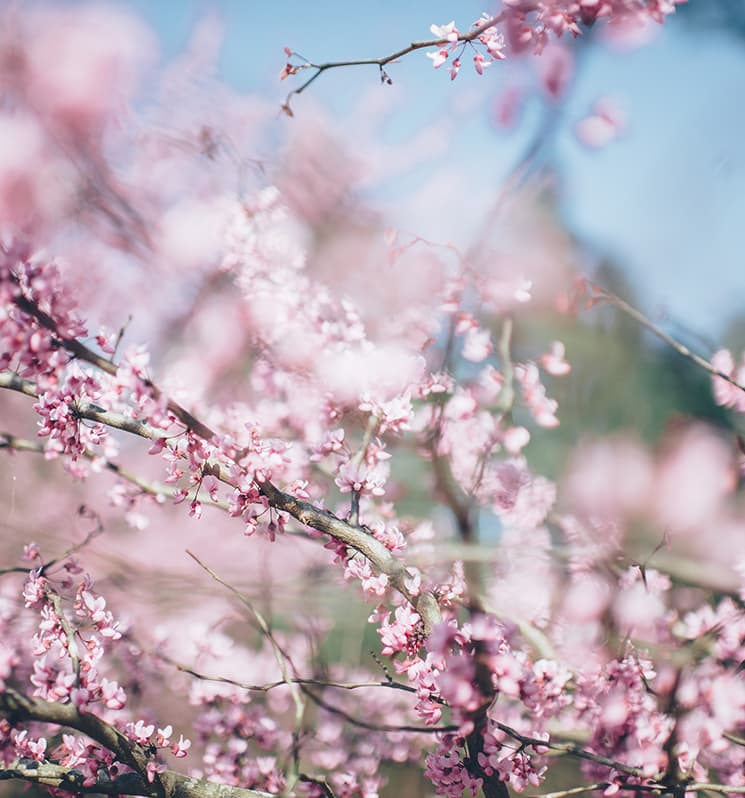 A primavera e o suicídio